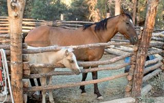 Payson cabin photo - Horses On-Site in Payson Arizona