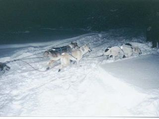 Rapid River lodge photo - Dog sledding