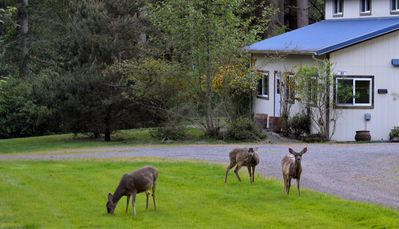 At Doe Bay Cottages, local deer make for quiet neighbors!