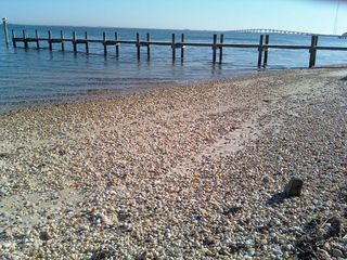 Hampton Bays house photo - scenic bay - pretty seashells and pebbles