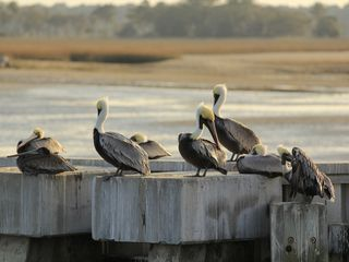 Forest Beach condo photo - Pelicans at Harbourtown