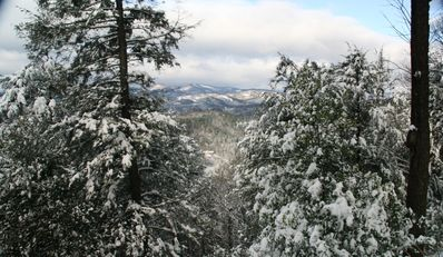 Graywolf Snow View