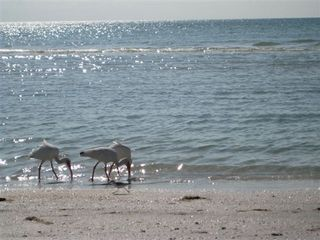 Sanibel Island condo photo - beachcombers