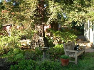 Sonoma cottage photo - A cottage garden wonderland...cat optional!