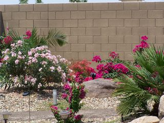 Maricopa house photo - Garden blooms in May