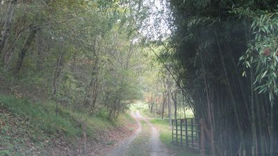 Entrance to the property, drive up our county lane.