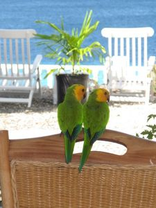 Even the Parakeets like our view