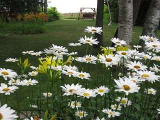 Northport cottage photo - Daisies outside LPM picture window