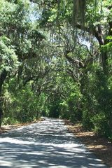 Amelia Island condo photo - The road to Ft. Clinch is beautiful and right next door!