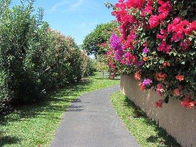 Take a stroll along a winding pathway on the Maui Vista grounds
