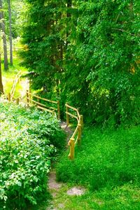 The path from the Main house to the cabins and the lake.