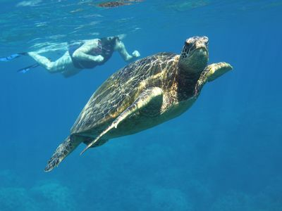 Snorkeling with the Turtles!