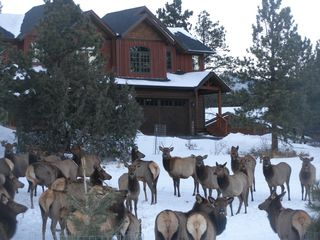 Estes Park condo photo - Come on over to Bobcat Ridge. We love it here!