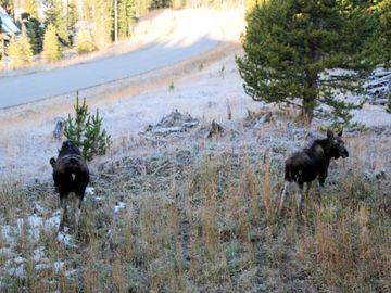 Fox, Moose and Elk are frequent winter visors to Casa Big SKy
