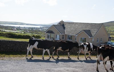 The house is set in rural Ireland, just one mile from Dingle town.