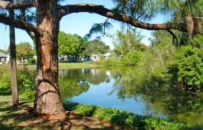 View of backyard pond from swing