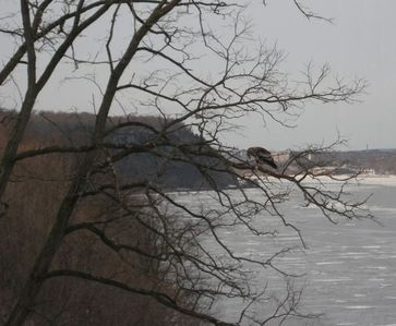 Winter View Of An Eagle From The Living Room