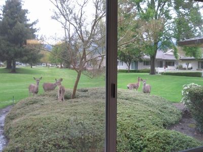 What's for breakfast? 5 deer nearby (photo by Gary Moon, Tulsa, Ok)