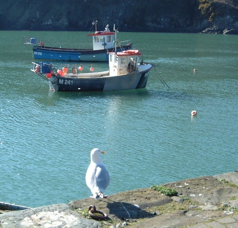 Seahorse cottage: A stylish cottage in the picturesque harbour of ...