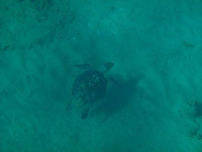 Snorkeling With A New Friend