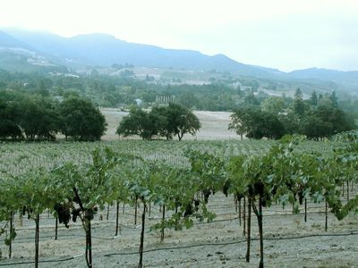 Vineyard that is Adjacent to Villa Napa