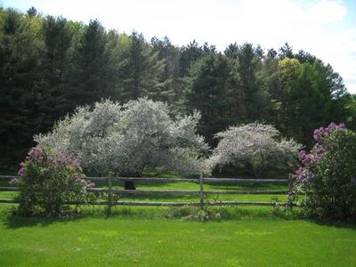 Apple blossoms and lilacs in bloom, in the west pasture.