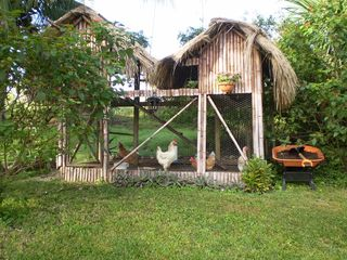 Bacalar house photo - Chickens and quails house. Fresh eggs everyday free.
