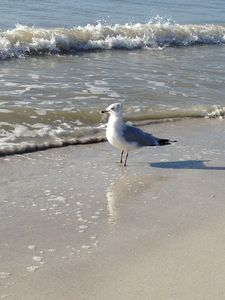 St Pete Beach condo rental - Keeping watch!
