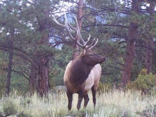Estes Park cabin photo - One of the Estes locals hanging out in the front yard.