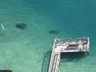 West Palm Beach condo photo - Manatees at our private fishing pier