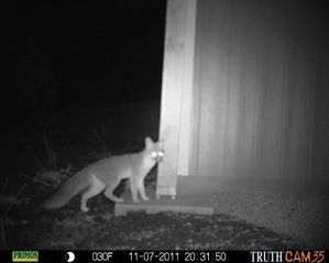 Grand Canyon cabin photo - Noctural visitor!