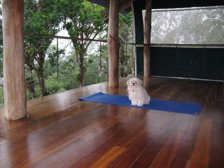 San Ramon villa photo - The upstairs balcony is ideal for yoga. And Villa Hada is pet friendly!