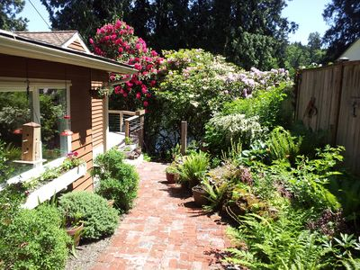 Luscious garden, native plants and flowering Rhododendrons lead to to the lake