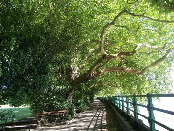 ... and this beautiful Thames riverside walk is just 5 mins away!