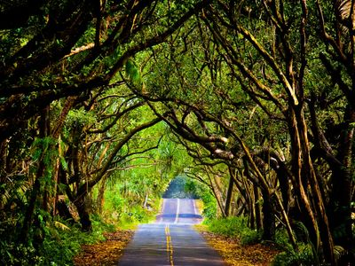 Historic Red Road on our Puna Coast!