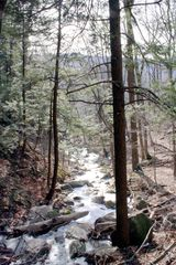 Phoenicia estate photo - Woodland stream on Mount Tremper