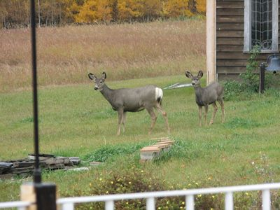 The occasional wildlife that comes to visit
