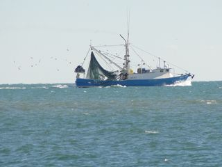 Gulf Shores cottage photo - Shrimper at Sea