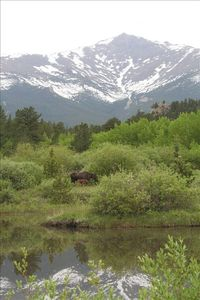 A Moose & her calf at the pond - taken by a renter! (Copyright Ann Alexander)
