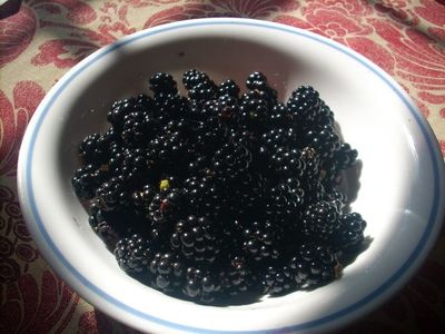 August blackberries from our cabin on Sherman Creek, 2012.