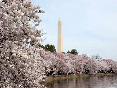 National Mall & Smithsonian Museums (10 min by bus/metro or 17 min by walk).
