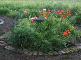 Montpelier house photo - Poppies. Spring 2011