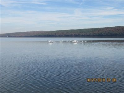 Pelicans frolicing in front of cabin toward Ark. river.