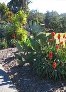 Our landscape is populated with many varieties of cactus and succulents.