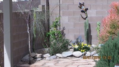 Marana house rental - Rock garden in the back yard requires no maintenance.