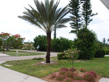 View of front yard with beautiful vegetation and front street/driveway.