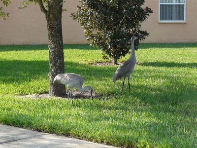 Cranes in the yard