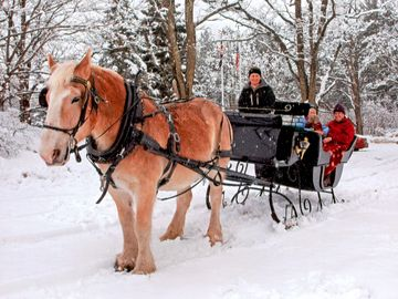 Take a sleigh ride for 2 or a group sleigh ride