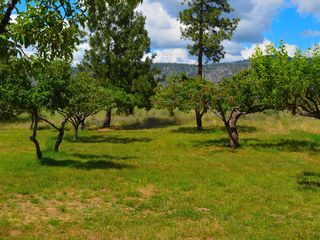 Lake Roosevelt house photo - Orchard full of cherries,apples,plums,pears when in season.