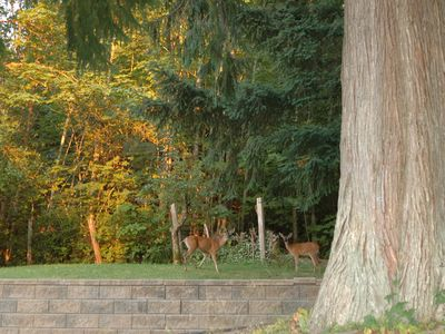 Shawnigan Lake House is on a one acre lot and backs onto woods. Deer often visit